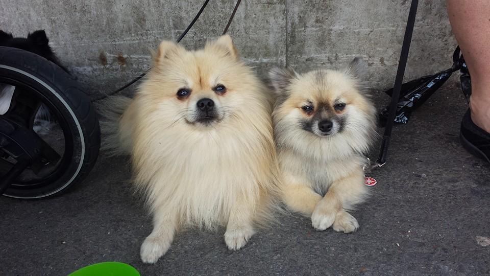 Eddie och Bella 20140727